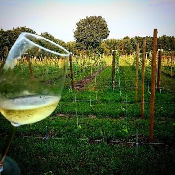 wijnglas wijngaard