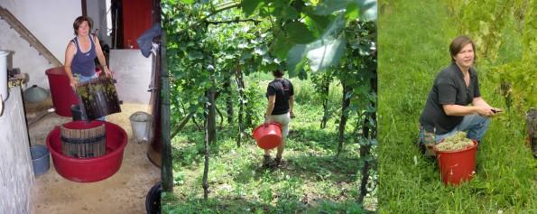 Miranda in wijngaard