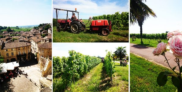 wijnreis 1 omgeving