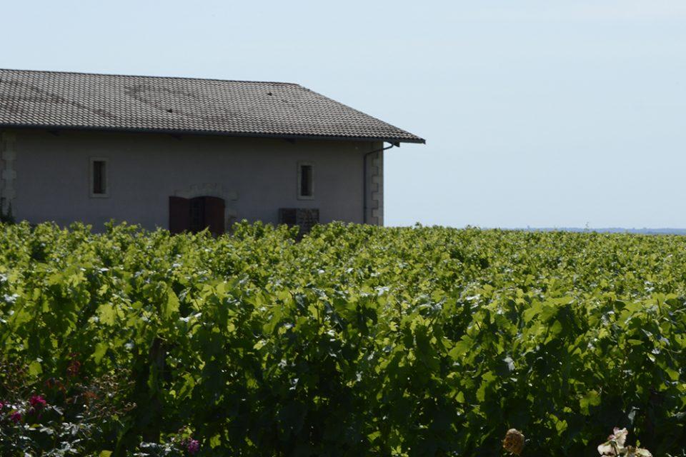 wijnreis Bordeaux deel 1