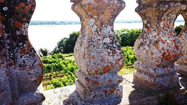 wijnreis wijngaard