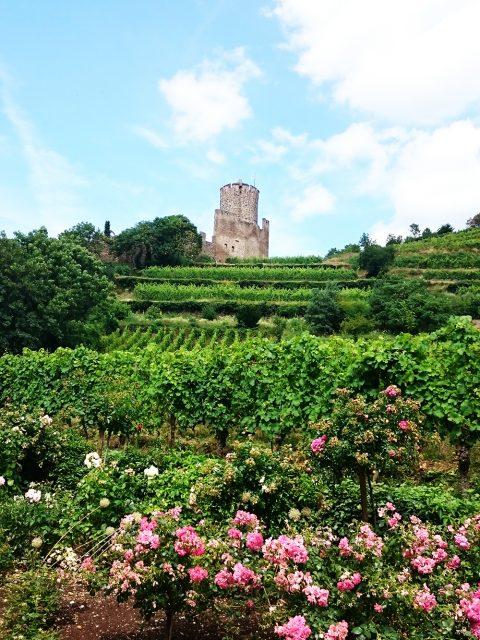 wijngebieden kasteel elzas