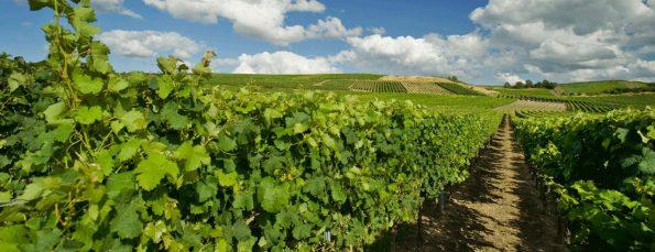 wijngebieden rheinhessen
