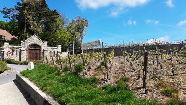 champagne wijngaard terroir