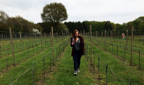 wandelen door wijngaard