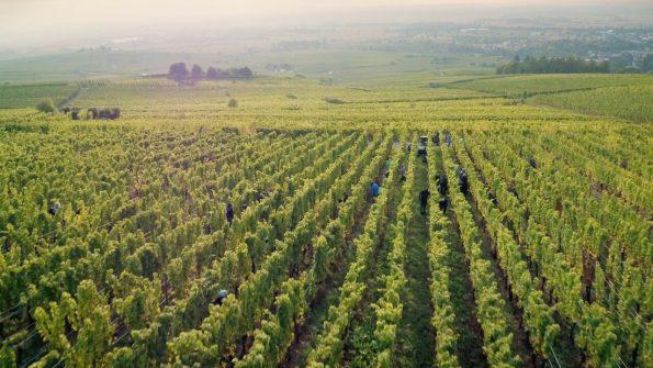 wijnmakers 1