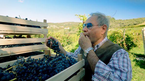 Masi wine masters