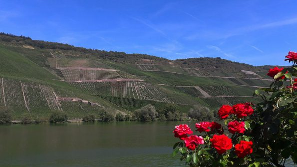 cool climate wijnen Duitsland