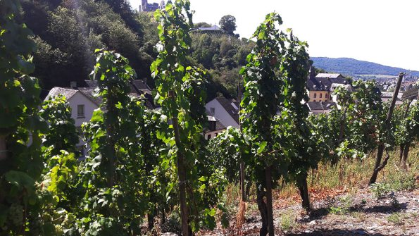 cool climate wijnen weingut